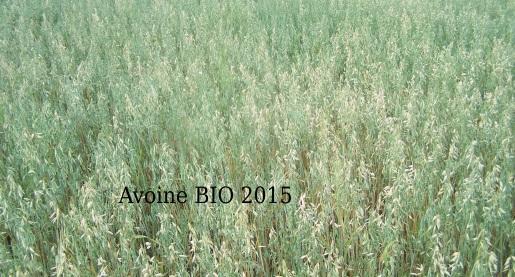 Avoine bio 2016